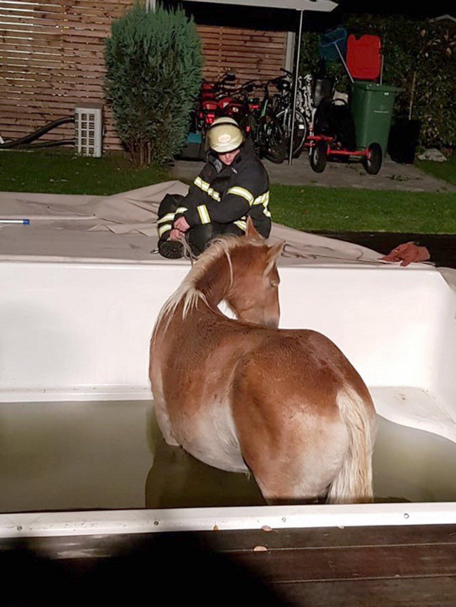Bild zu Feuerwehr rettet Pony aus dem Pool