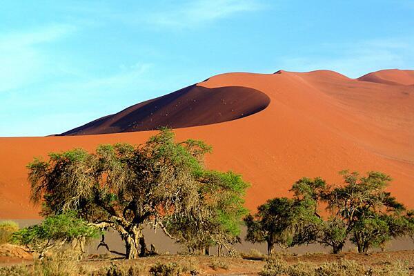 Bild zu Eine Sanddüne in Sossusvlei.