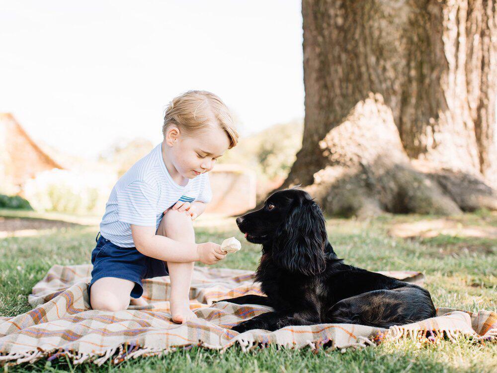 Bild zu Prinz George macht mit Hund Lupo ein Picknick