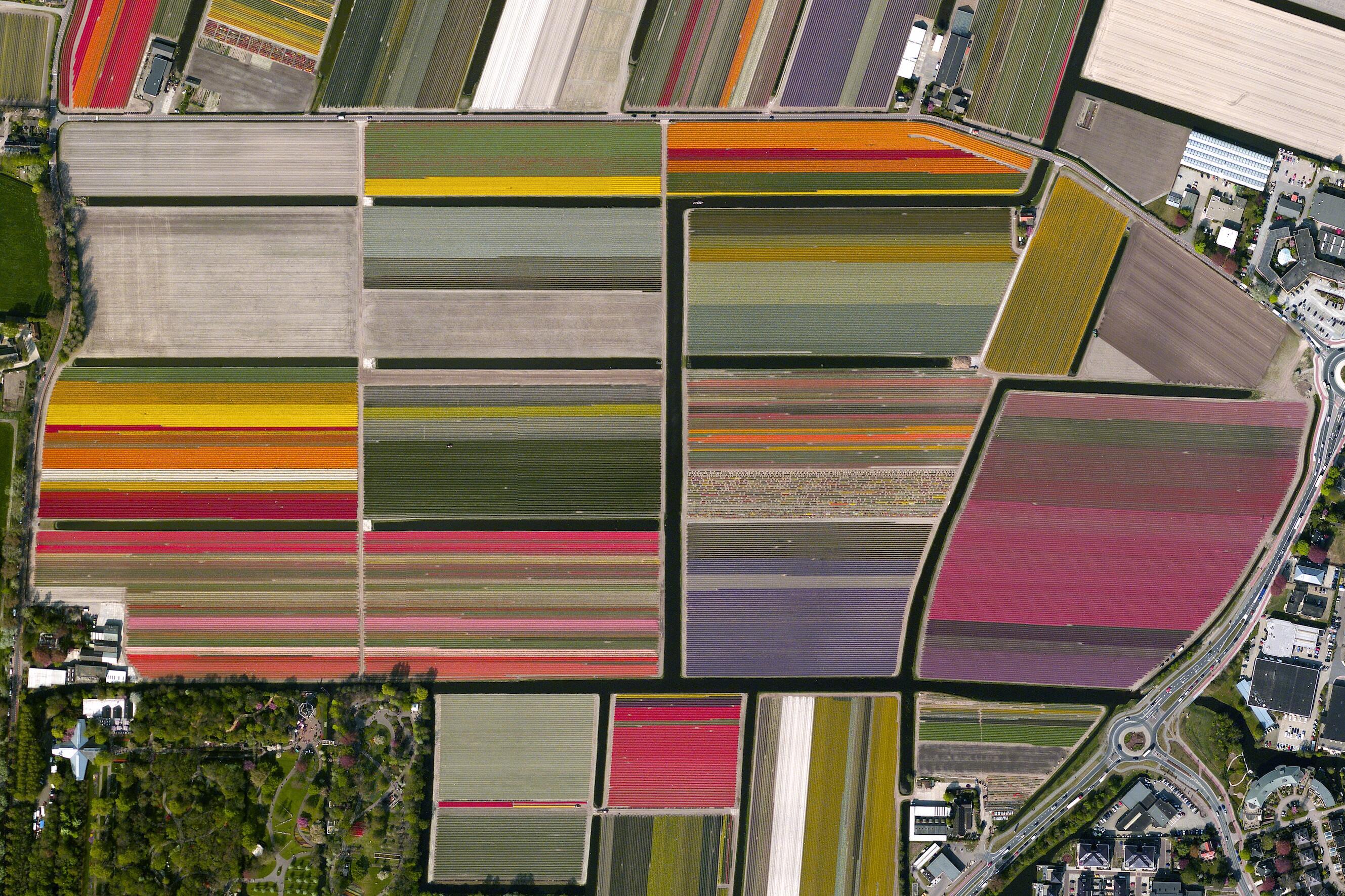Bild zu Lisse, Niederlande