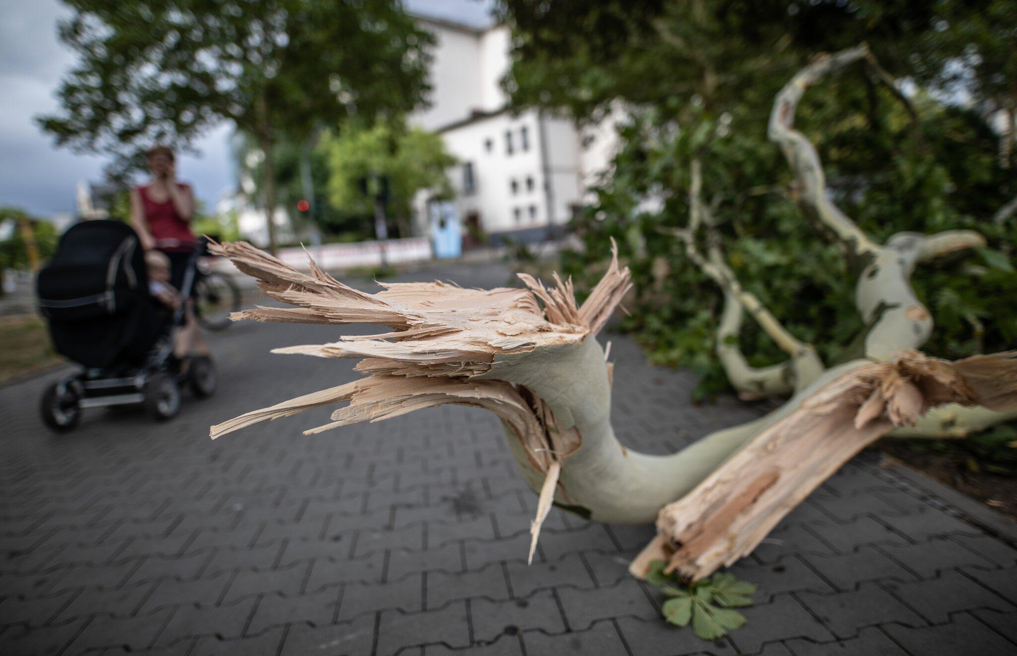 Bild zu Sturm und Regen in Frankfurt am Main