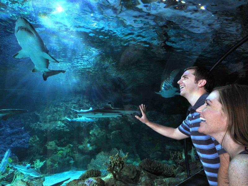Bild zu SeaWorld