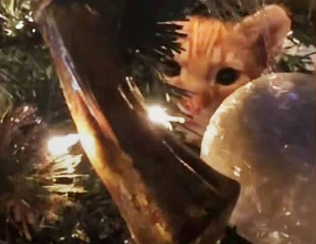 Bild zu Weihnachten, Weihnachtsbaum, Christbaum, Katze, Versteck, USA, Patterson, Alici Gorner