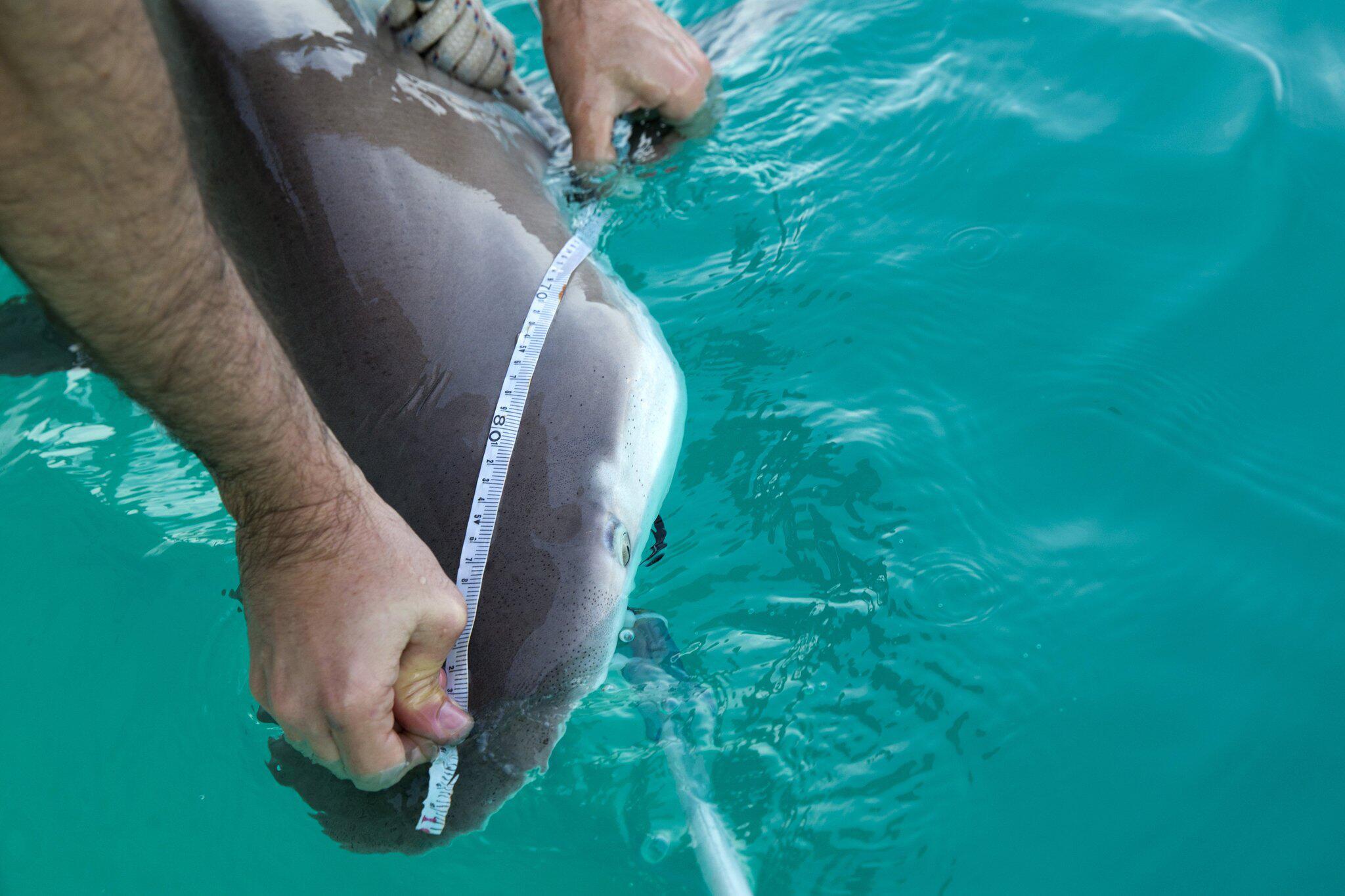 Bild zu Haie tummeln sich vor Israels Küste