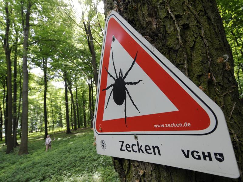 Bild zu Zecken-Gefahr