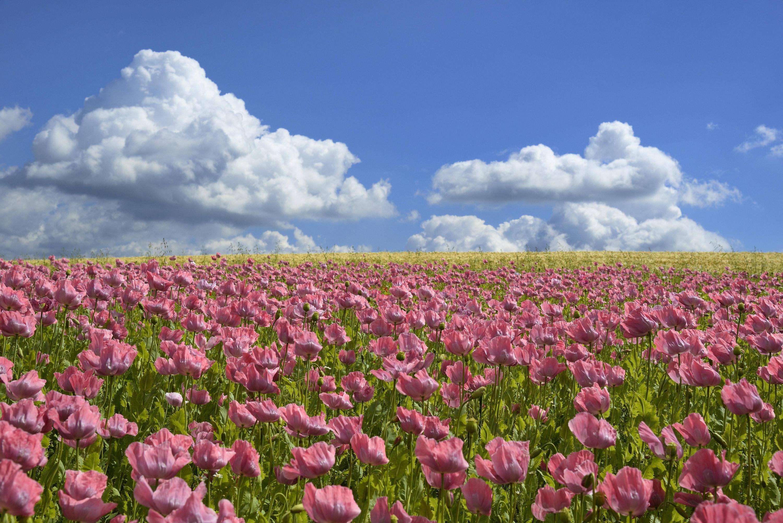 Bild zu Cumuluswolke