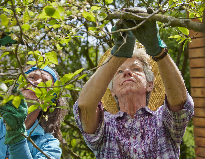 Bild zu Obstbaum