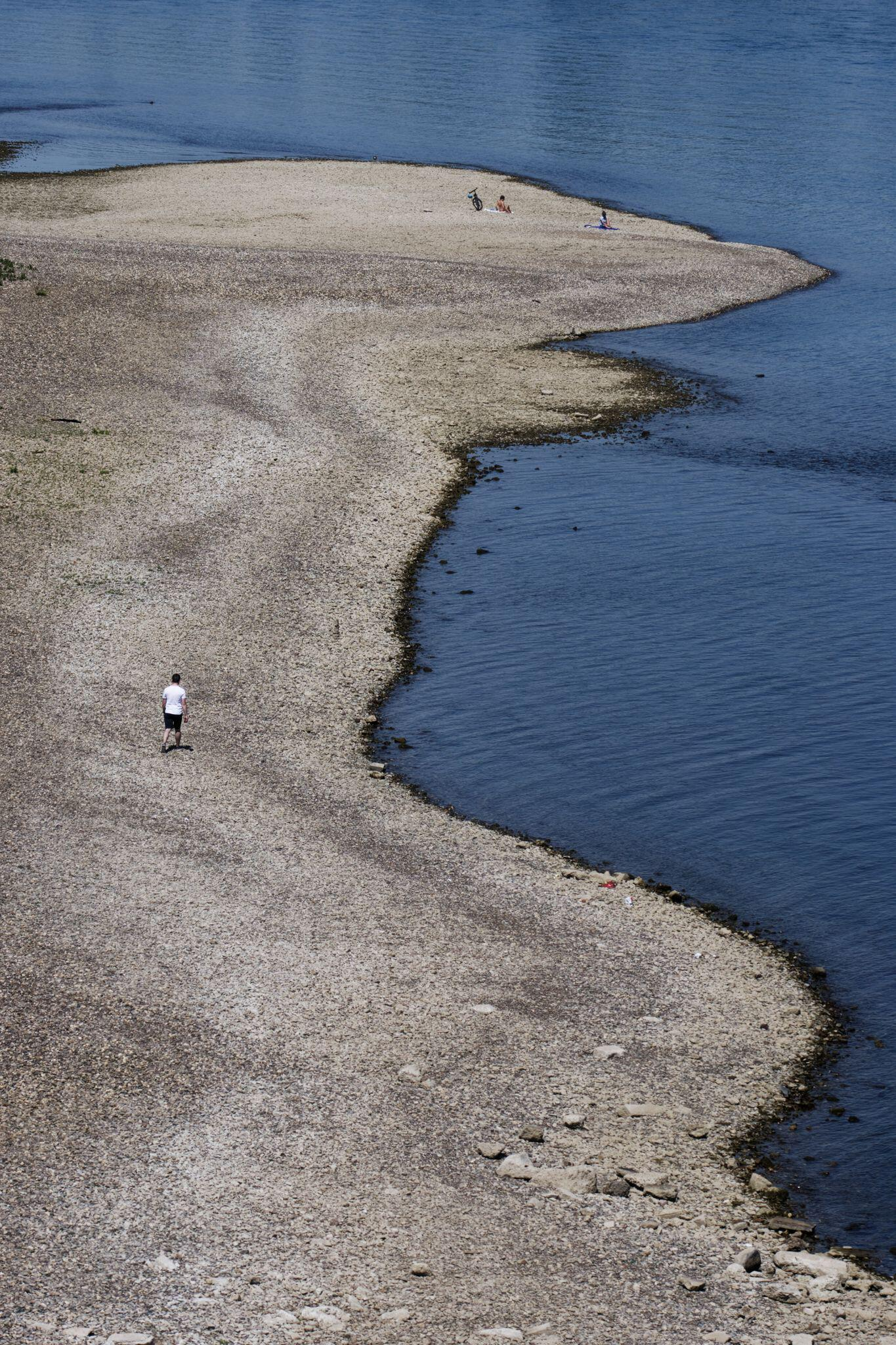 Bild zu Sommer am Rhein