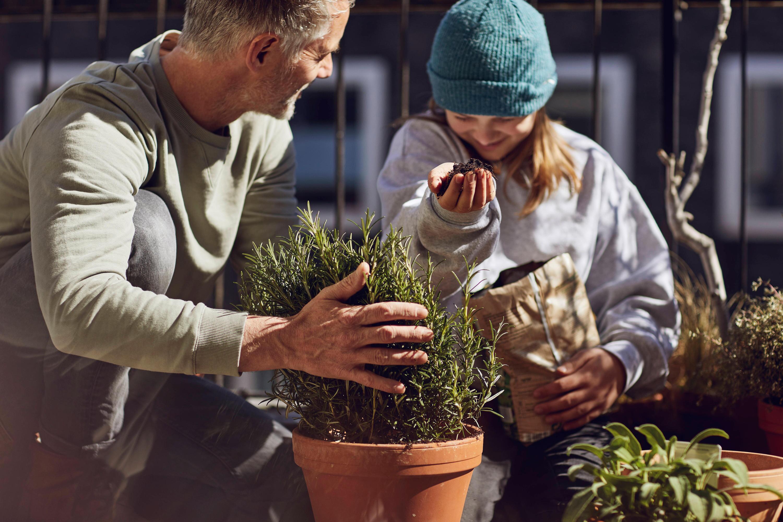 Bild zu Balkon, Pflanzen