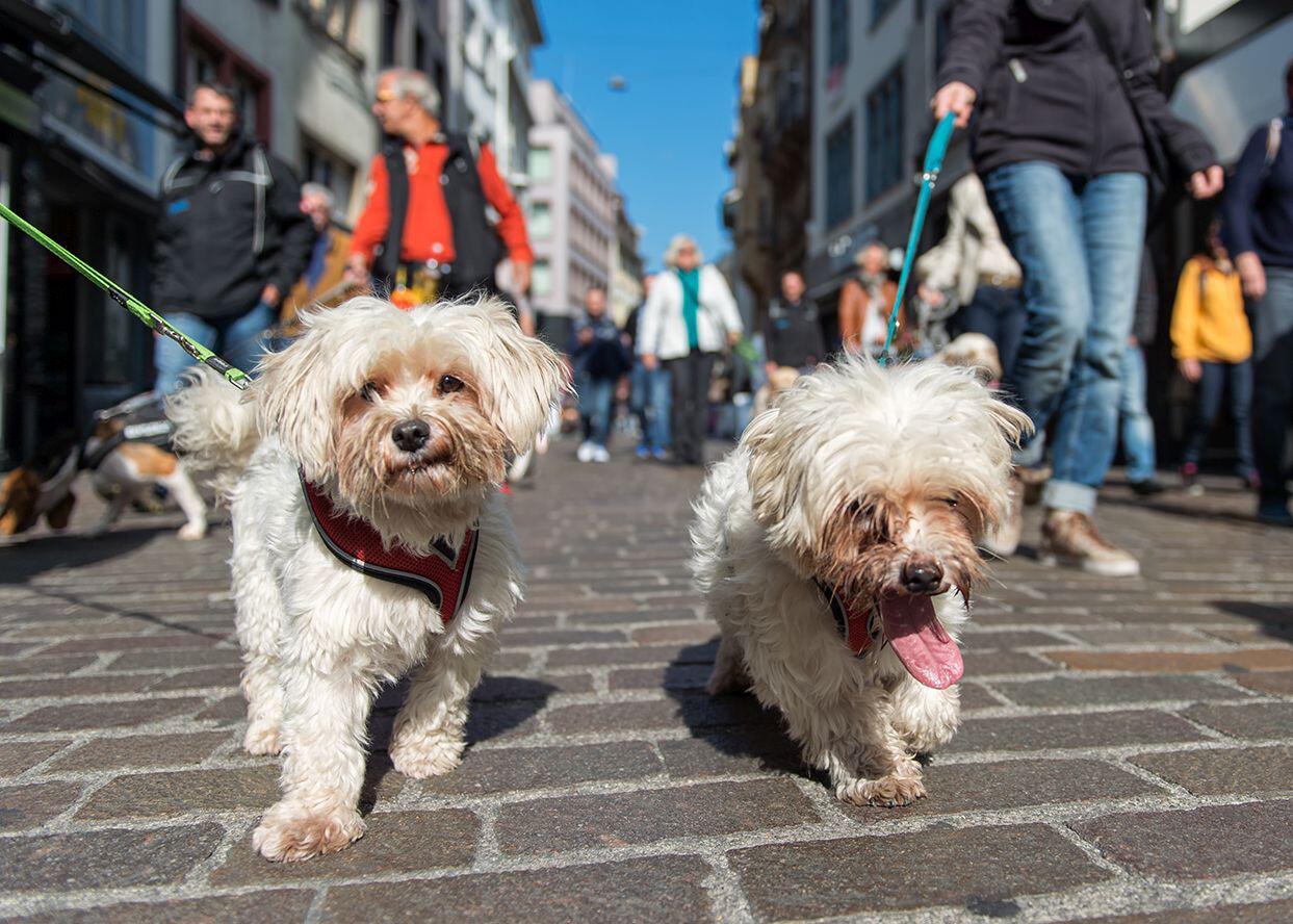Bild zu Hunde, Basel, Flashmob