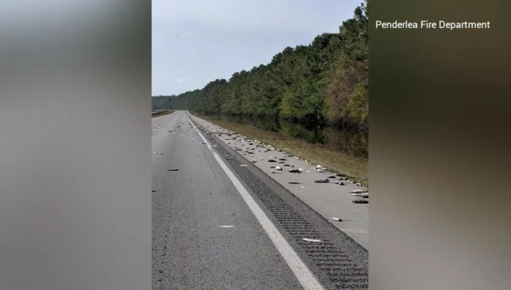 Bild zu tote Fische auf dem Highway