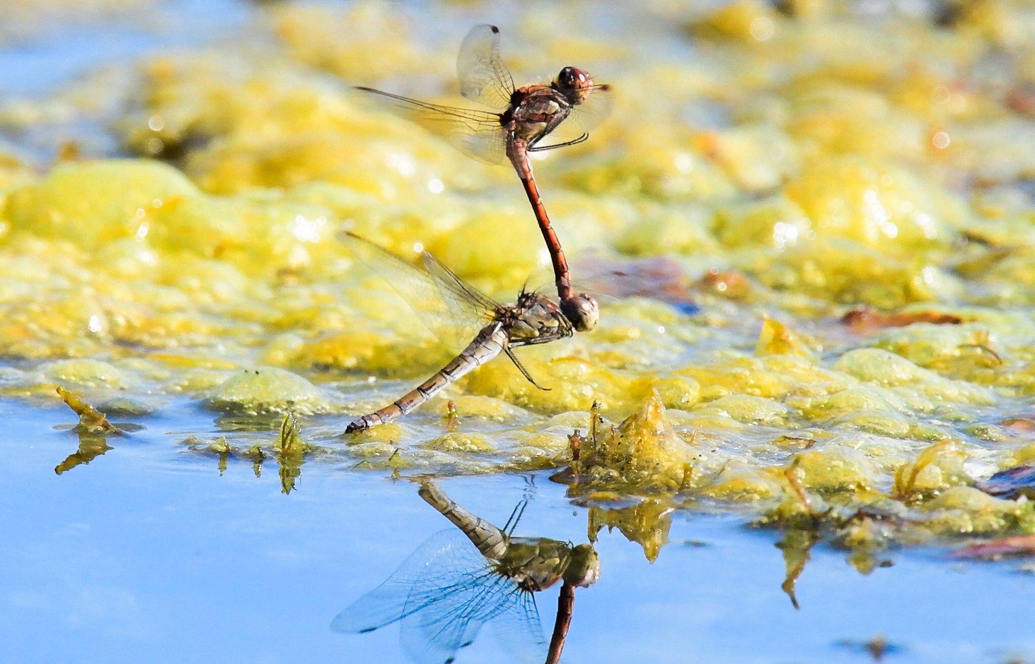 Bild zu Artenvielfalt