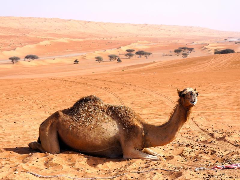 Bild zu Sultanat Oman