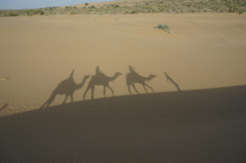 Bild zu Thar Wüste