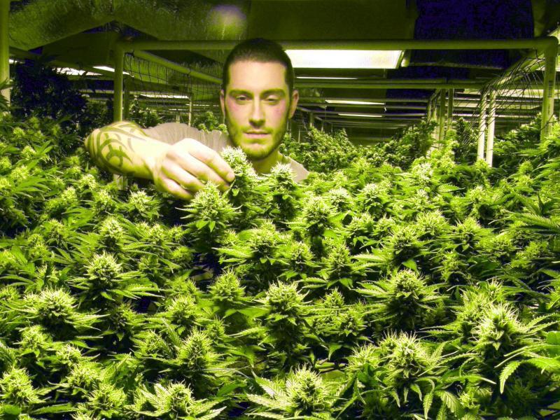 Bild zu Hoffnung Cannabis