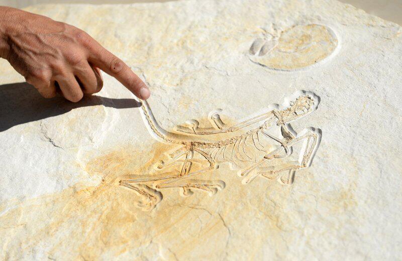 Bild zu Archaeopteryx
