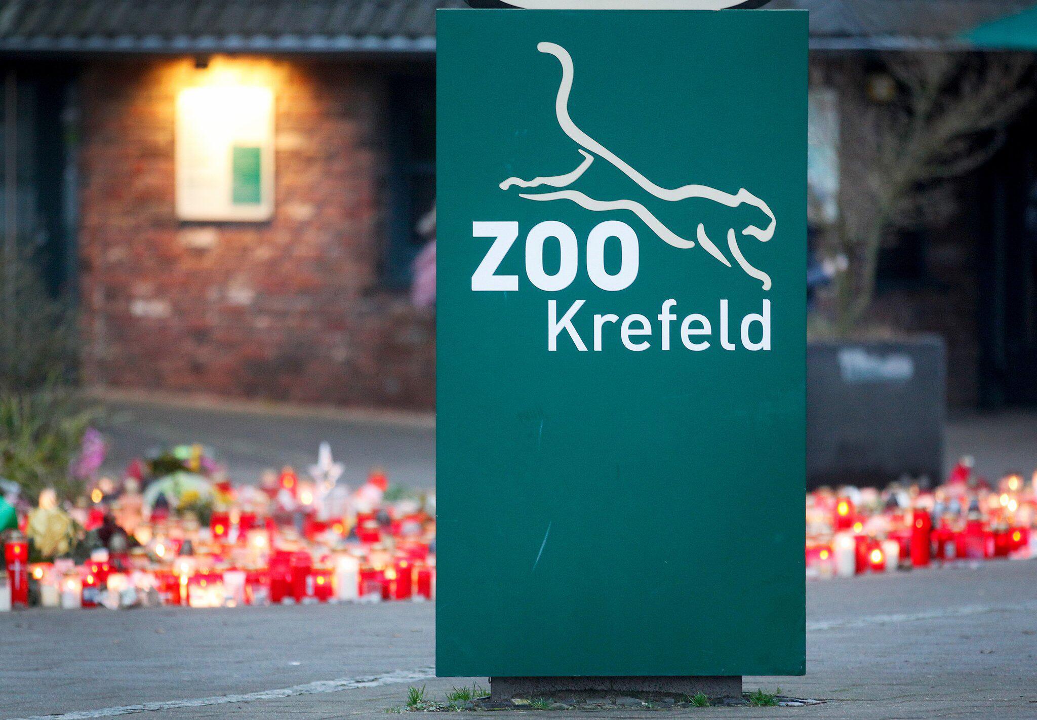 Bild zu Weg zu Gorillas in Krefelder Zoo soll bald wieder frei sein
