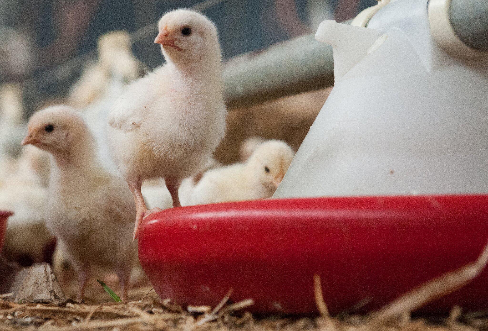 Bild zu Tierfutter