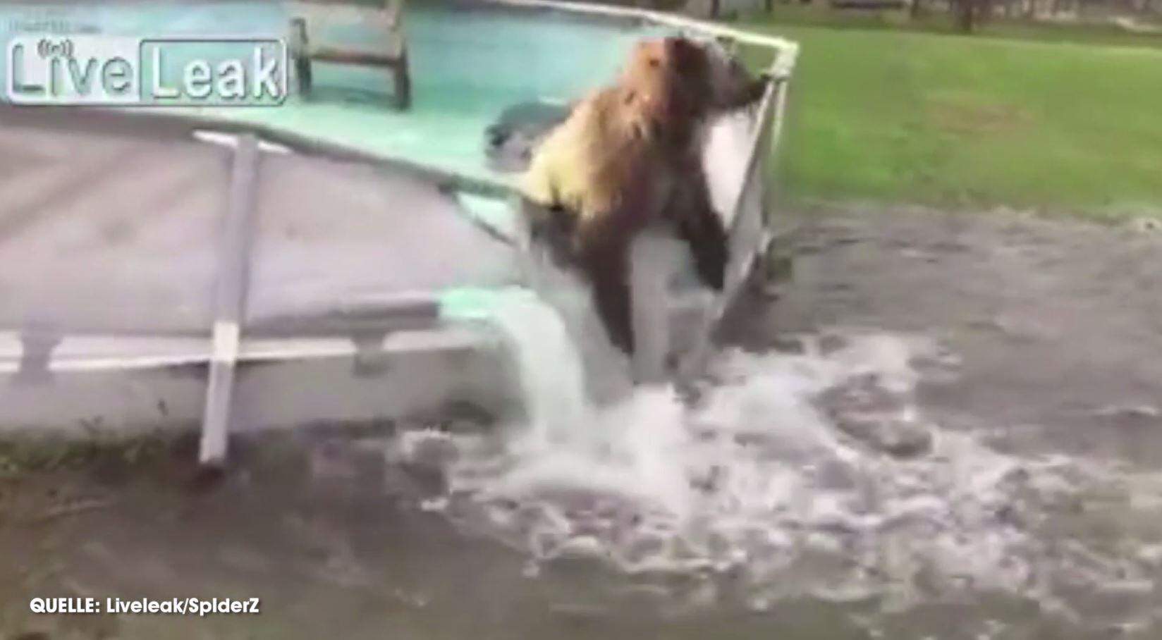 Bild zu Lustiger Bär