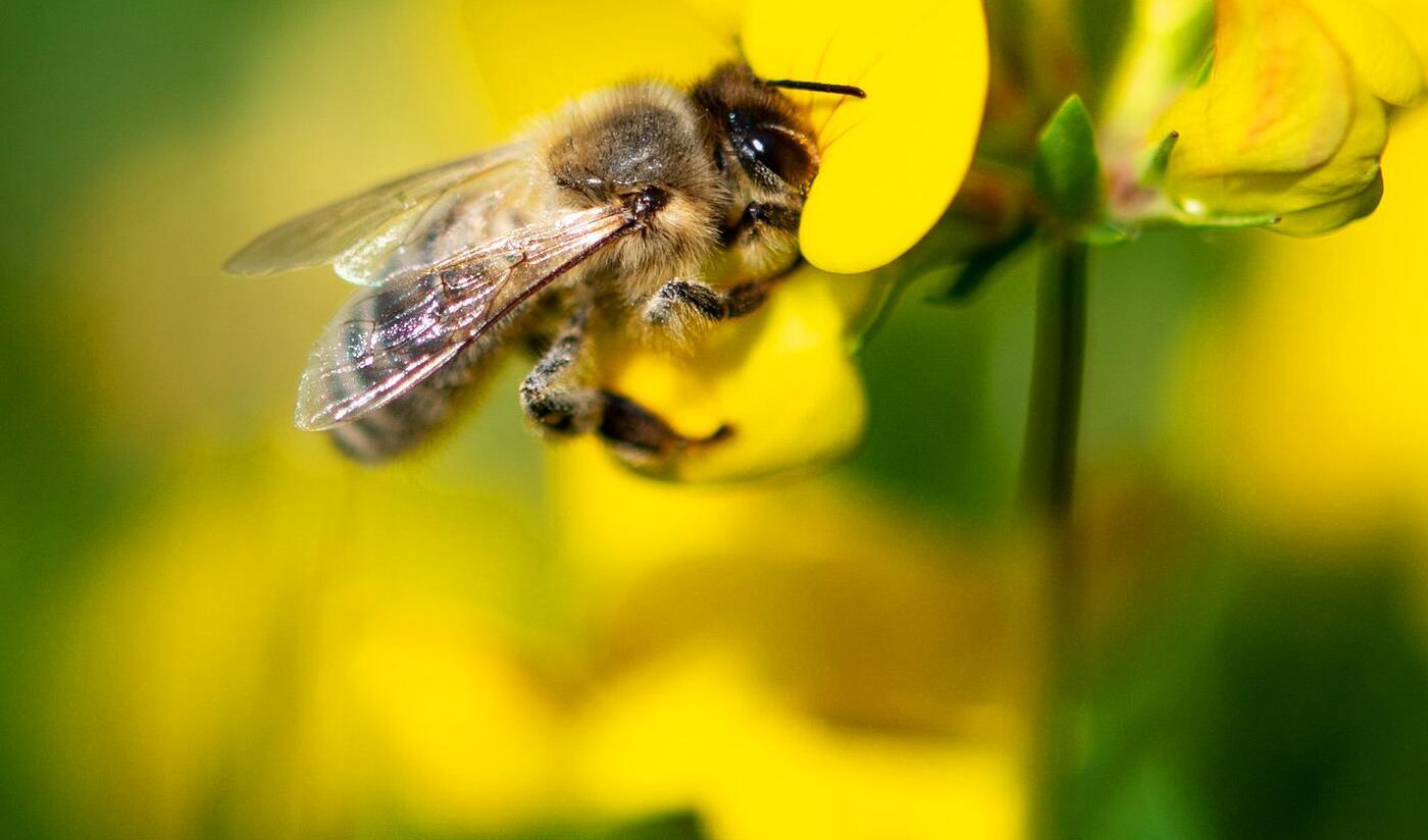 Bild zu Insektenschwund in Deutschland