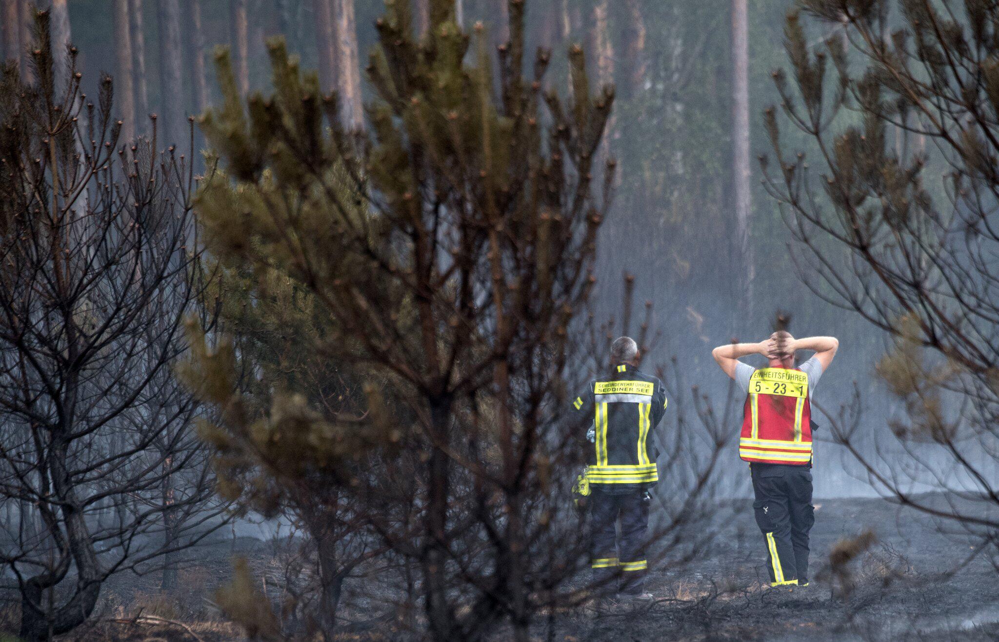 Bild zu Weiterer Waldbrand in Brandenburg