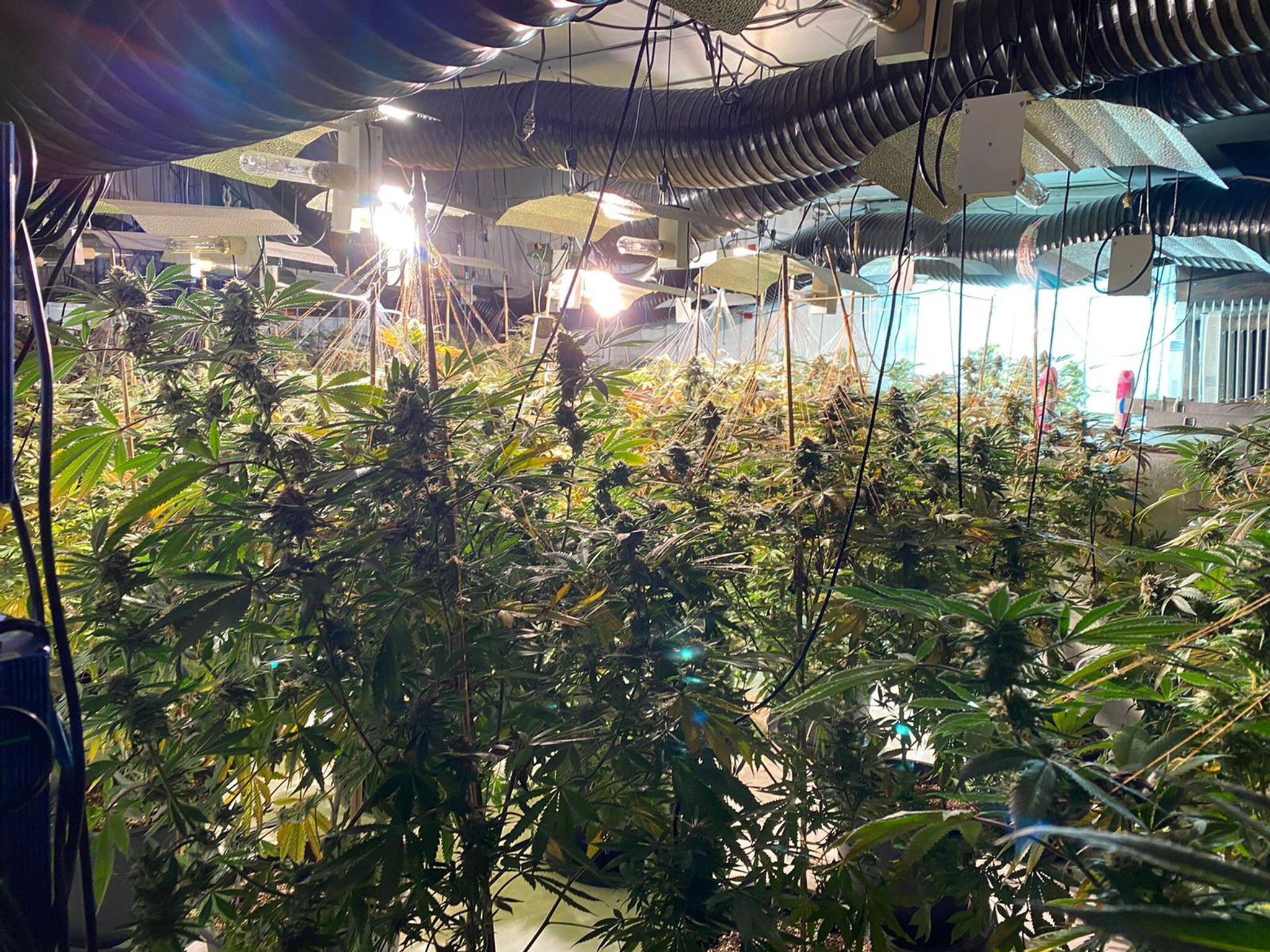 Bild zu Cannabis-Farm in England