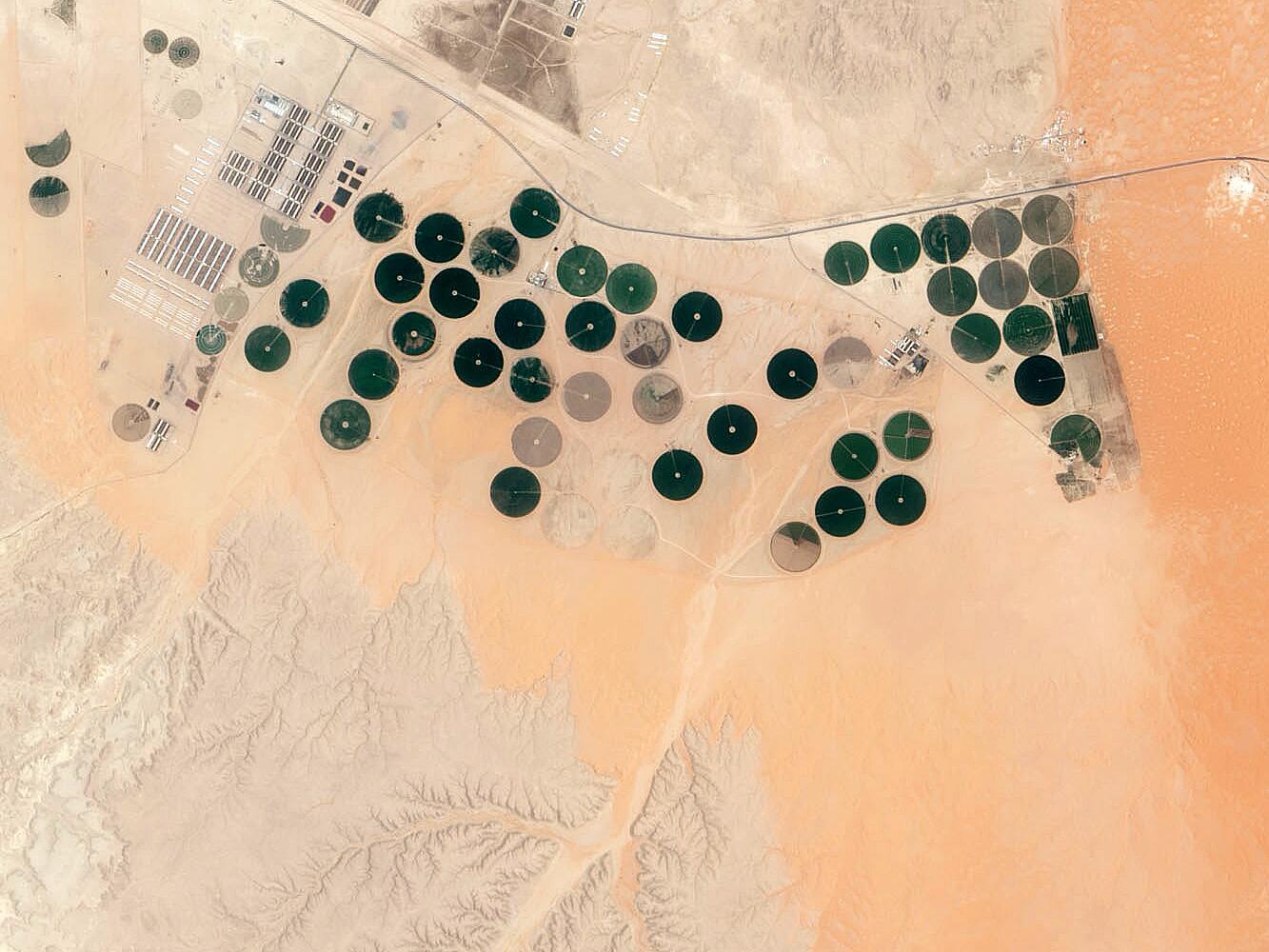 Bild zu Landwirtschaftliche Betrieb bei Riad