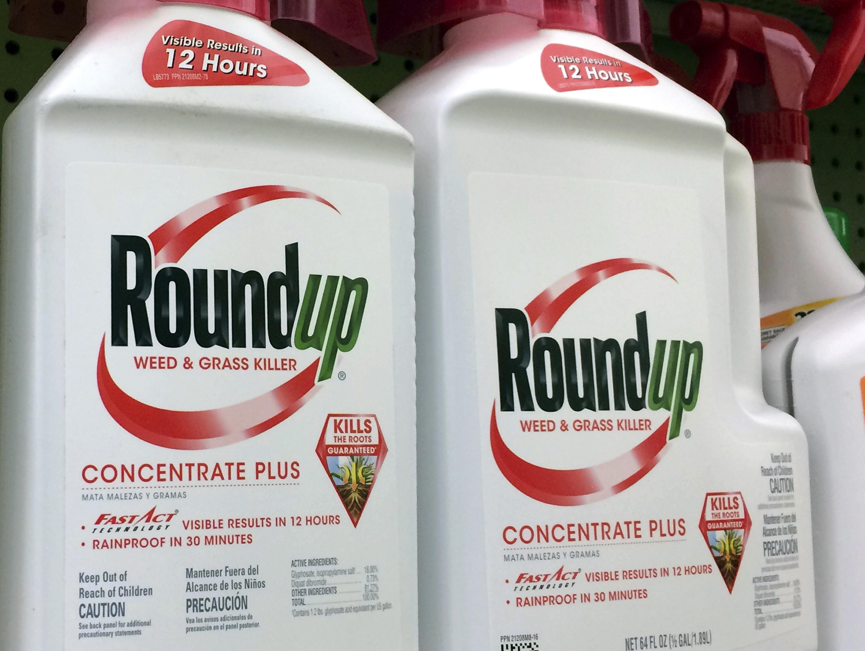 Bild zu Glyphosat-Prozess gegen Bayer-Tochter Monsanto