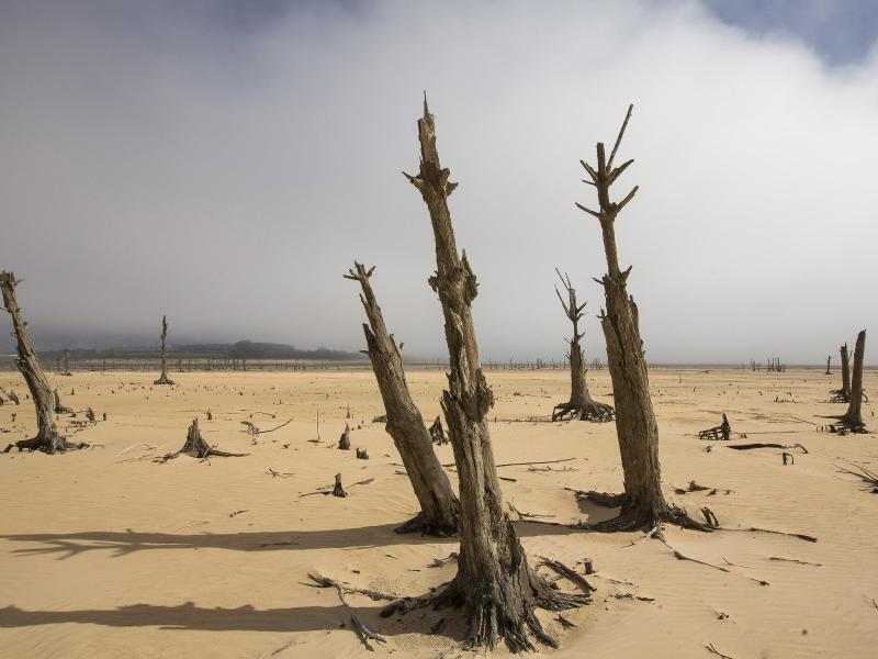 Bild zu Dürre