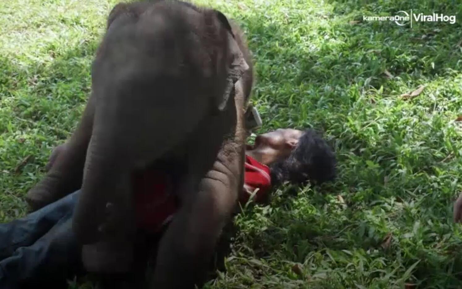 Bild zu Elefantenbaby Suki
