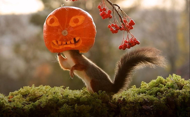 Bild zu Halloween