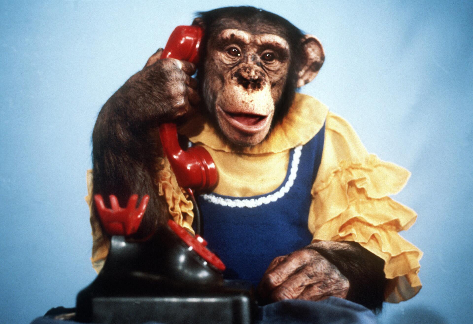 Bild zu Ronnys Pop-Show, Original, Schimpanse