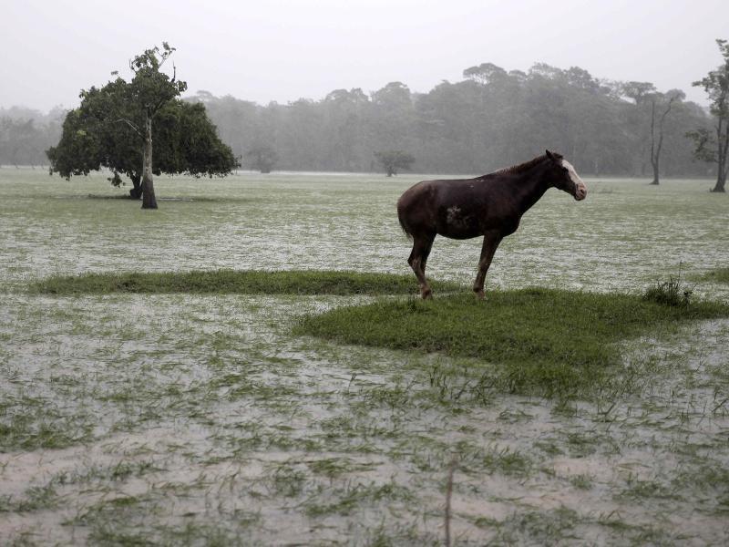 Bild zu Überschwemmt