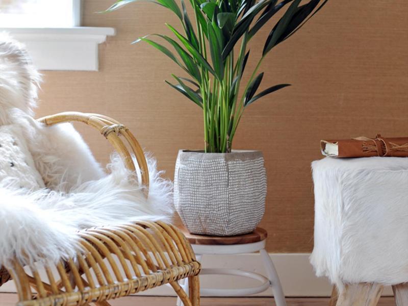 pflanzen f r faule dieses gr n braucht wenig pflege. Black Bedroom Furniture Sets. Home Design Ideas