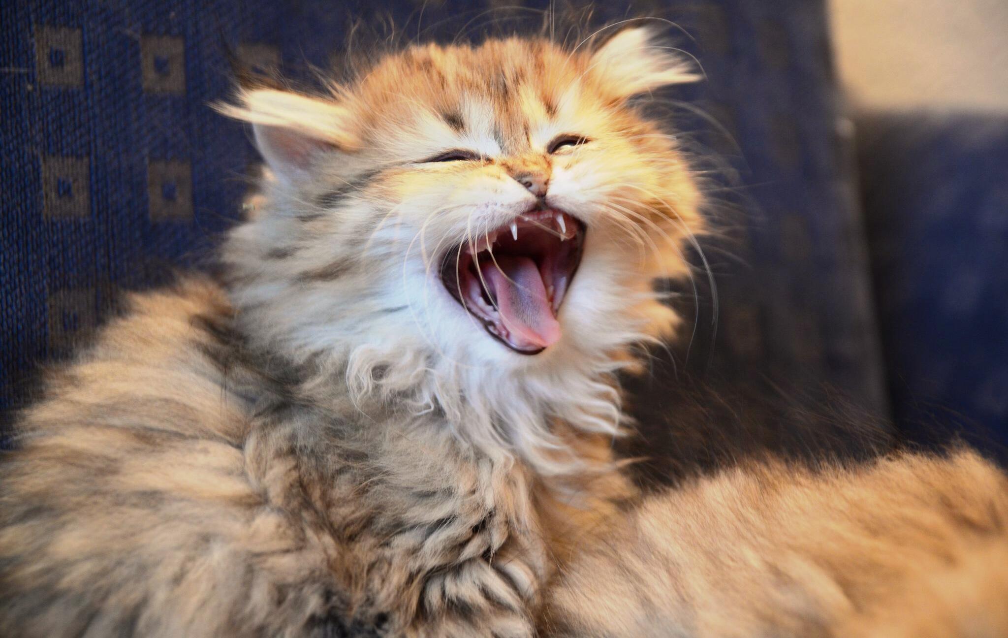 Bild zu Gezwitscher auf Beutejagd: Die Sprache der Katzen verstehen