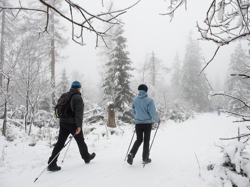 Bild zu Winter im Nationalpark Harz