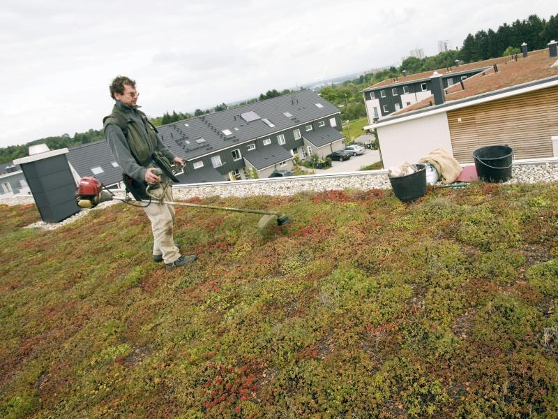 Bild zu Bepflanzung des Flachdaches