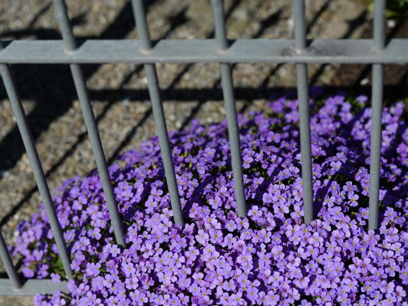 Bild zu Gartenzaun