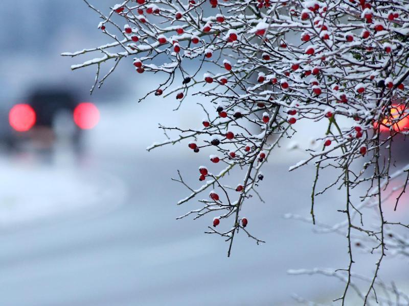 Bild zu Schneefall
