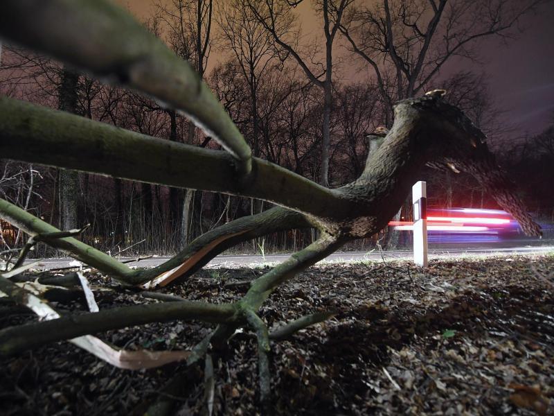 Bild zu Sturmschaden in Sachsen