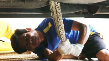 Bild zu Chonburi, Thailand, Auto, Schlange, Python, Tierfänger