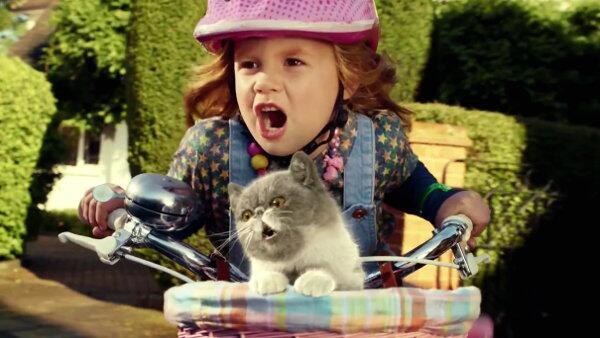 Bild zu Sing it kitty