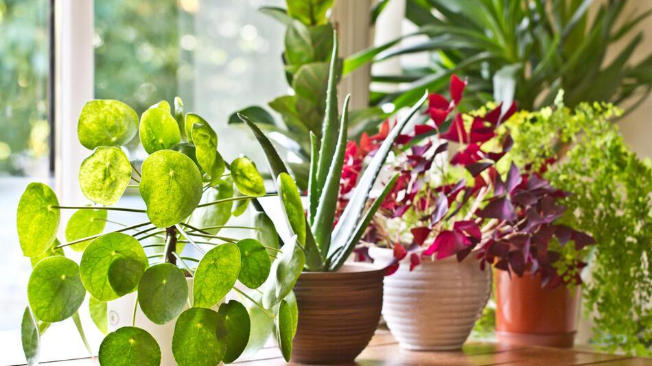 Pflanzen, Wasser, Blumen, Gießen, Urlaub, Bewässerungssystem, Automatisch