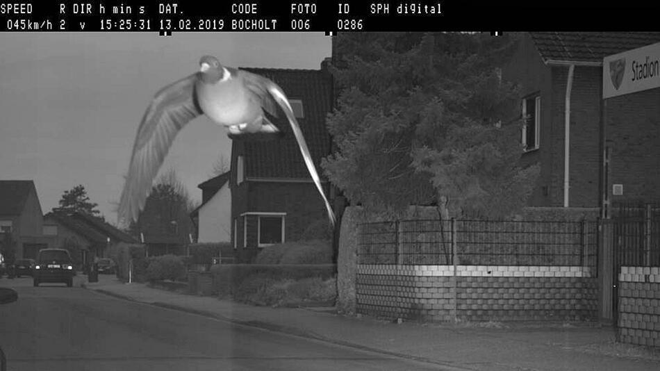 Geblitzt: Stadt Bocholt erwischt rasende Taube