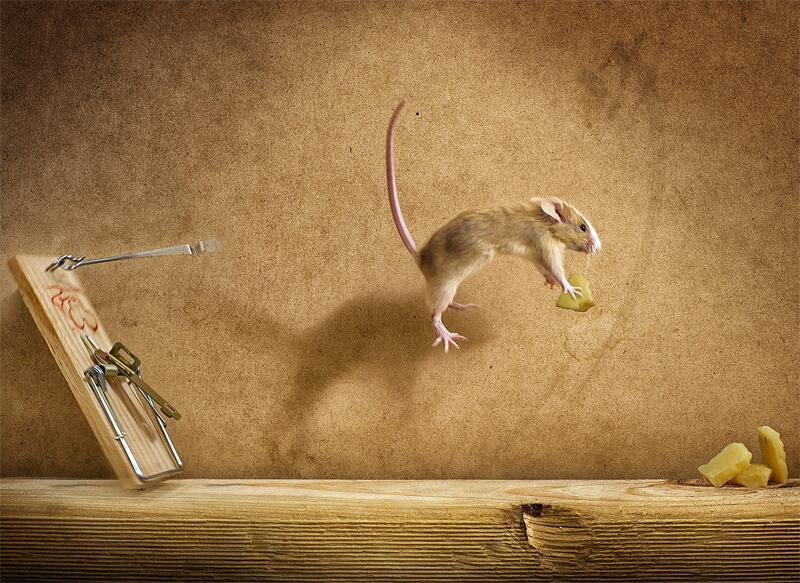 Bild zu Maus und Käse
