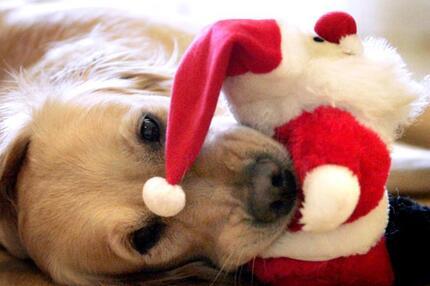 Hund mit Weihnachtsmann-Stoffpuppe