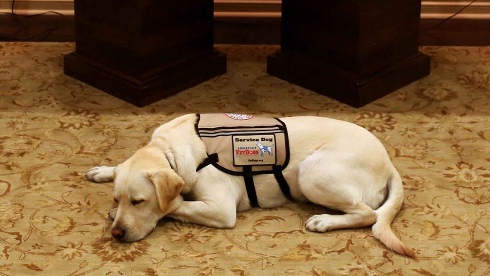 "Bild zu Bushs Hund ""Sully"" ruht vor Sarg"