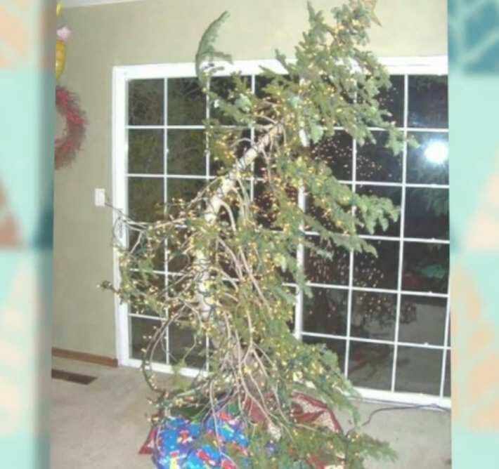 Bild zu Schreckliche Weihnachtsbaeume