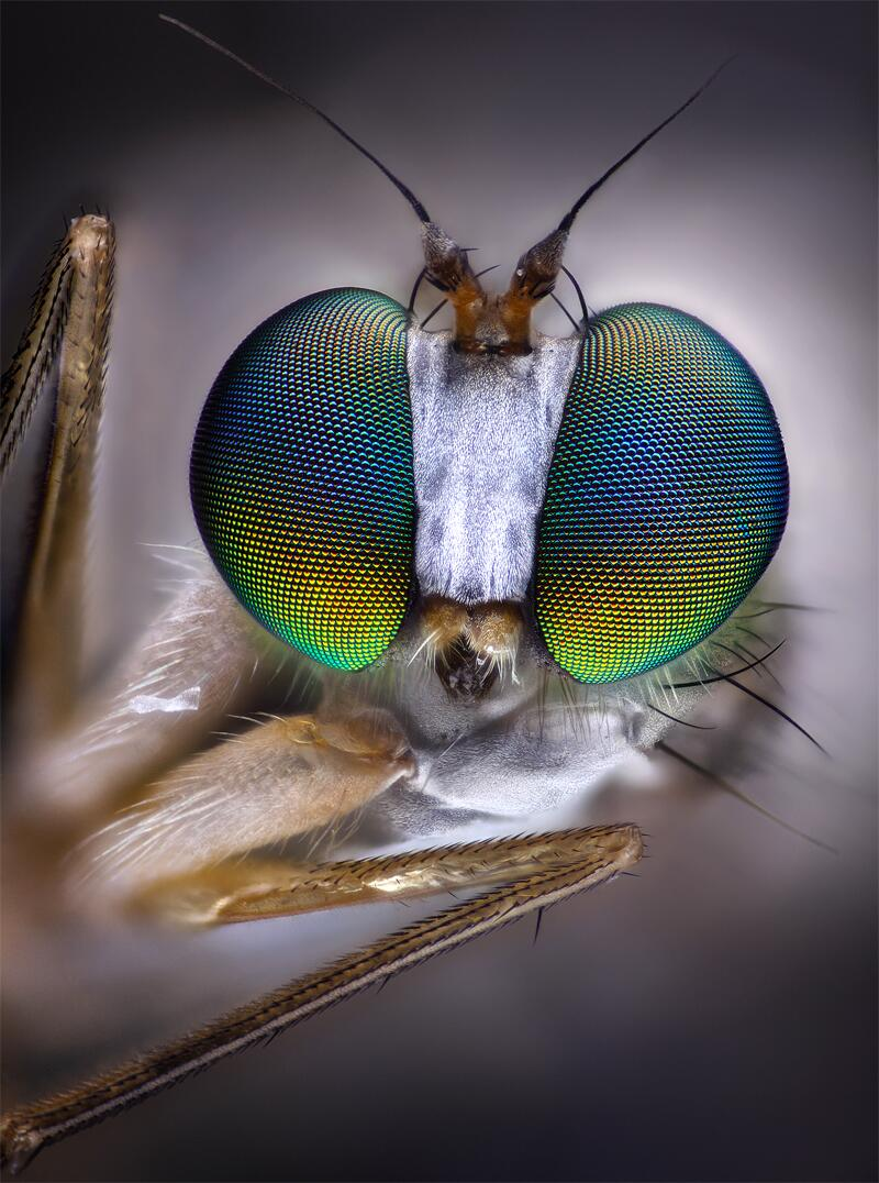 Bild zu Nahaufnahme einer Fliege