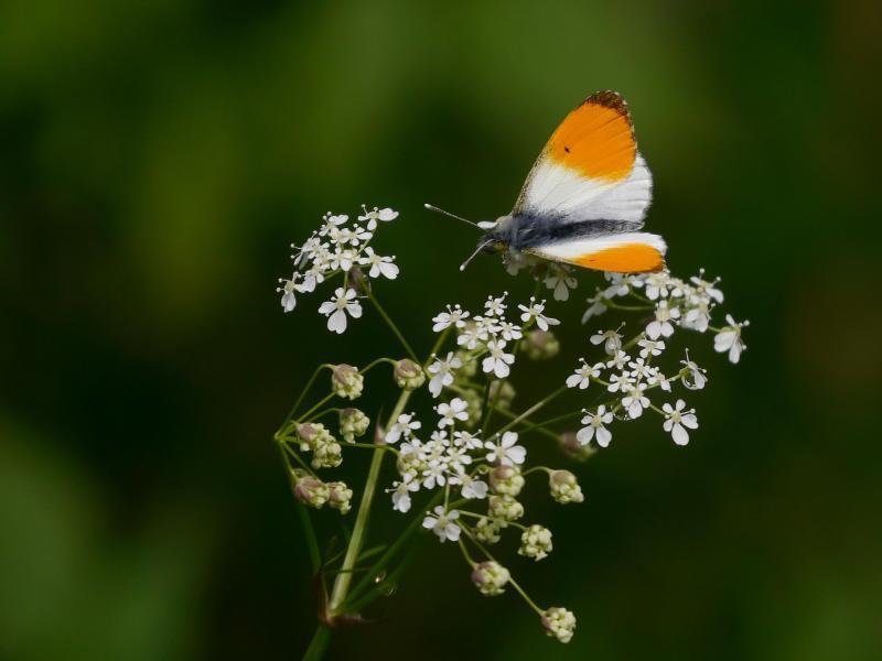 Bild zu Fotos von Blüten